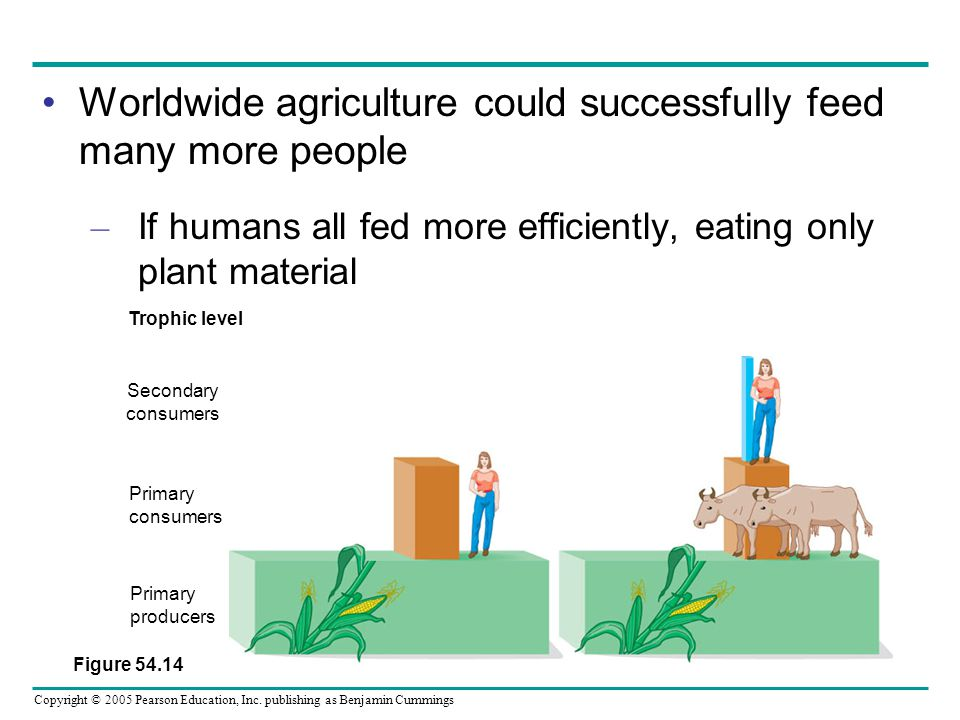 Copyright © 2005 Pearson Education, Inc. publishing as Benjamin Cummings Worldwide agriculture could successfully feed many more people – If humans al