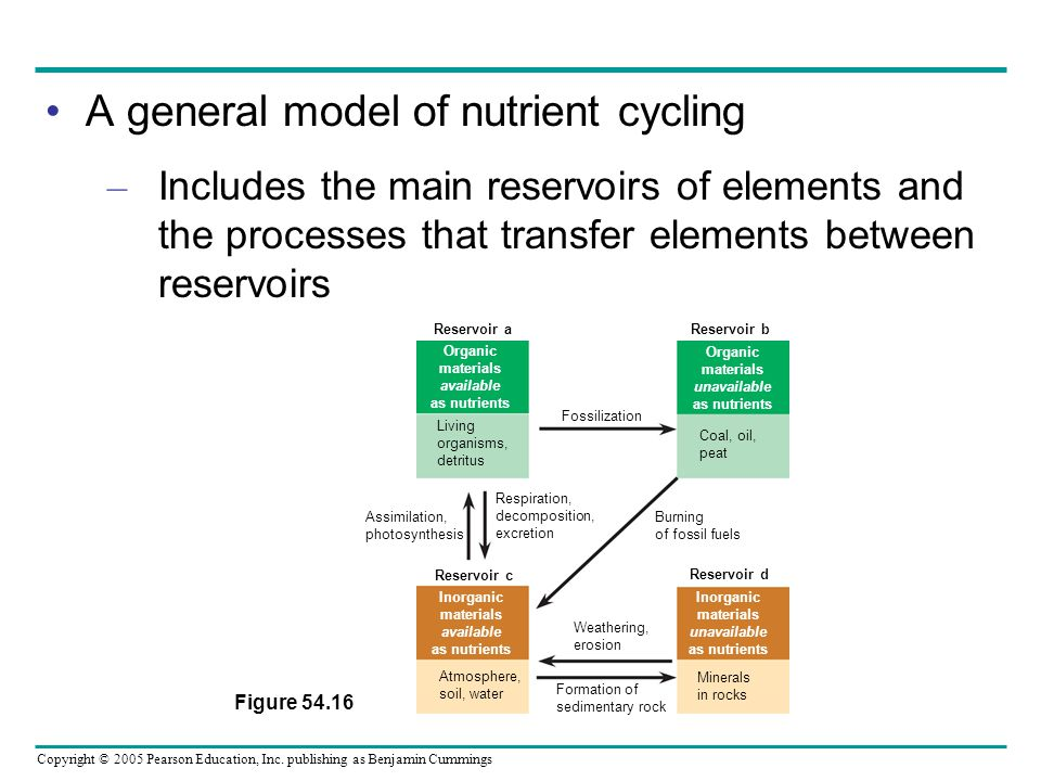 Copyright © 2005 Pearson Education, Inc. publishing as Benjamin Cummings A general model of nutrient cycling – Includes the main reservoirs of element