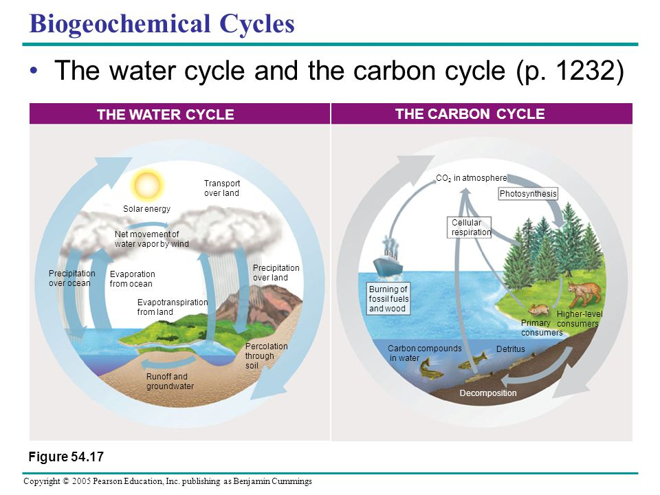 Copyright © 2005 Pearson Education, Inc. publishing as Benjamin Cummings Biogeochemical Cycles The water cycle and the carbon cycle (p. 1232) Figure 5