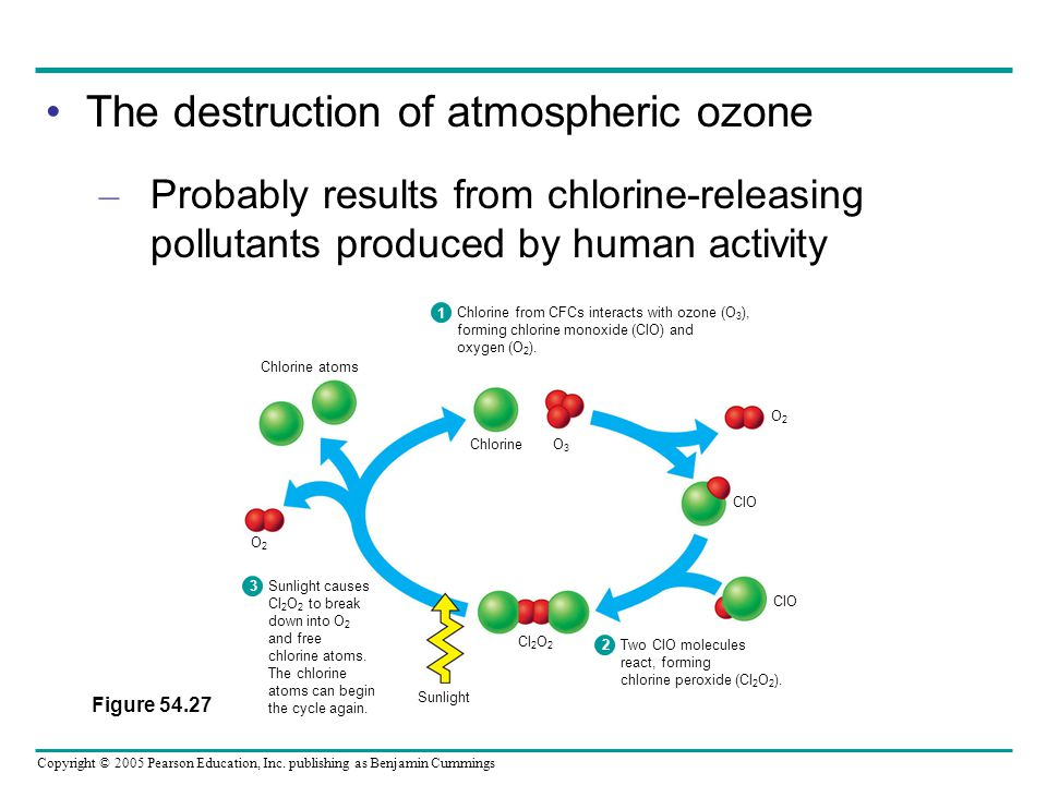 Copyright © 2005 Pearson Education, Inc. publishing as Benjamin Cummings The destruction of atmospheric ozone – Probably results from chlorine-releasi