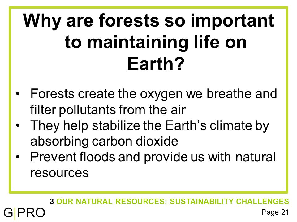 G|PRO Why are forests so important to maintaining life on Earth.