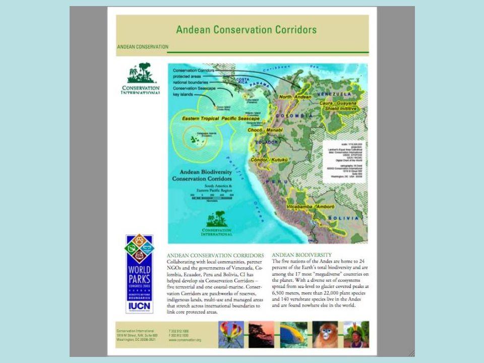 Black Cocoa Ant controls several major cacao pests