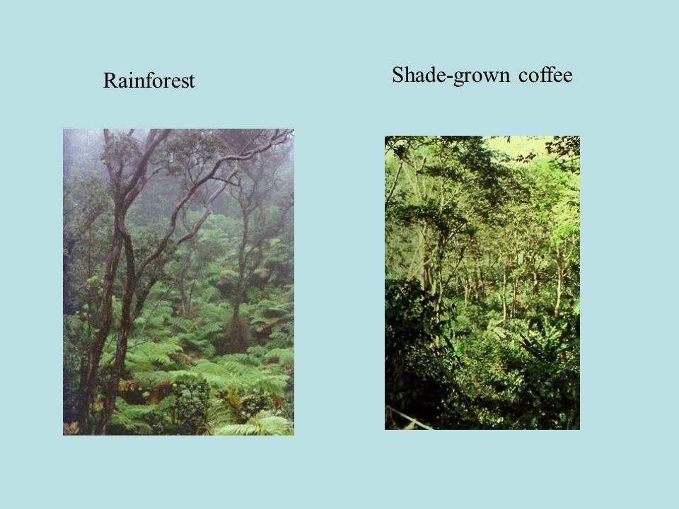 Rainforest Shade-grown coffee