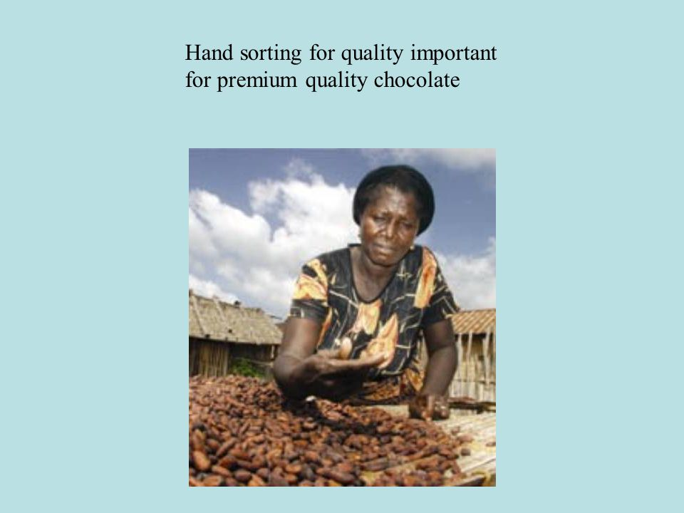 Hand sorting for quality important for premium quality chocolate