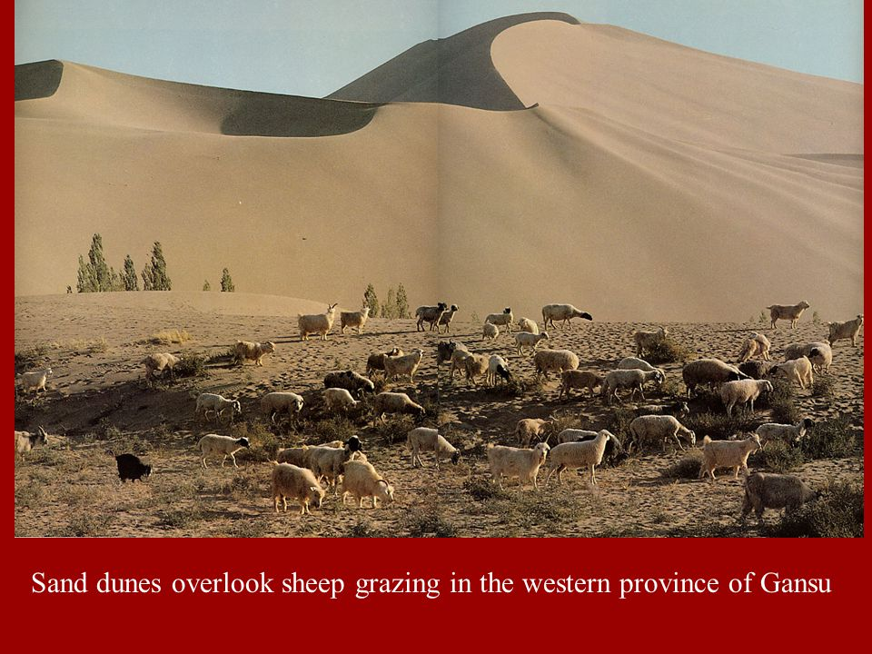 Sand dunes overlook sheep grazing in the western province of Gansu