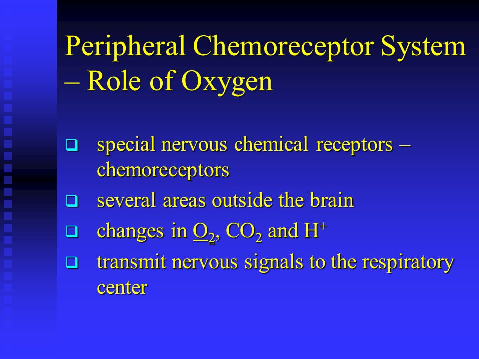 Peripheral Chemoreceptor System – Role of Oxygen  special nervous chemical receptors – chemoreceptors  several areas outside the brain  changes in O 2, CO 2 and H +  transmit nervous signals to the respiratory center