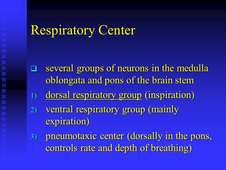Respiratory Center  several groups of neurons in the medulla oblongata and pons of the brain stem 1) dorsal respiratory group (inspiration) 2) ventral respiratory group (mainly expiration) 3) pneumotaxic center (dorsally in the pons, controls rate and depth of breathing)