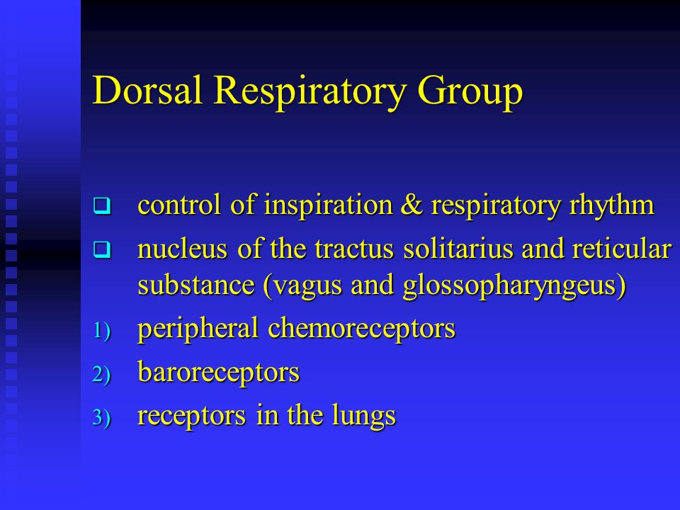 Dorsal Respiratory Group  control of inspiration & respiratory rhythm  nucleus of the tractus solitarius and reticular substance (vagus and glossopharyngeus) 1) peripheral chemoreceptors 2) baroreceptors 3) receptors in the lungs