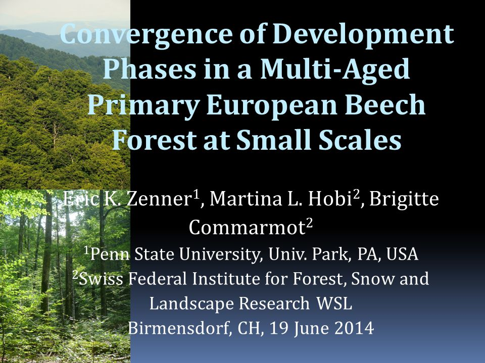 Convergence of Development Phases in a Multi-Aged Primary European Beech Forest at Small Scales Eric K.