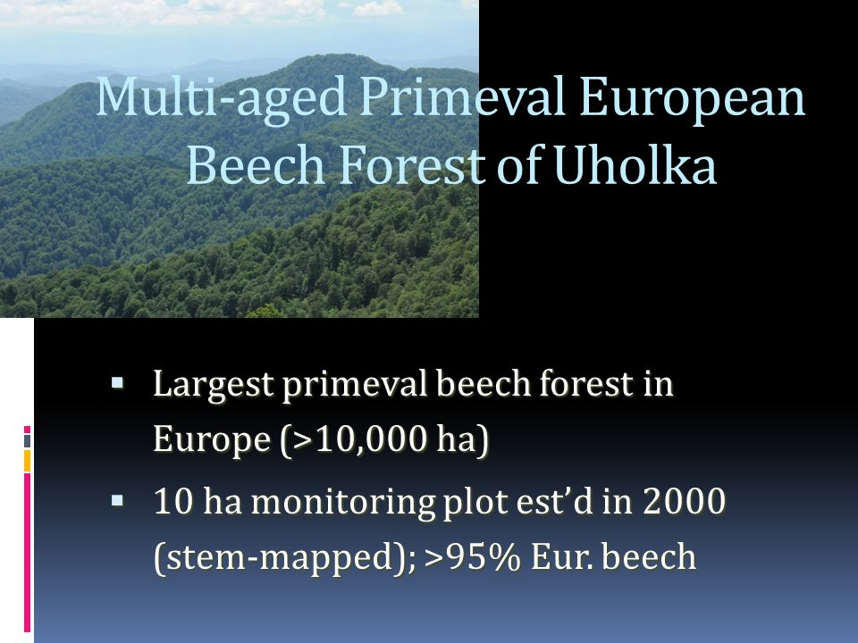 Multi-aged Primeval European Beech Forest of Uholka  Largest primeval beech forest in Europe (>10,000 ha)  10 ha monitoring plot est'd in 2000 (stem-mapped); >95% Eur.