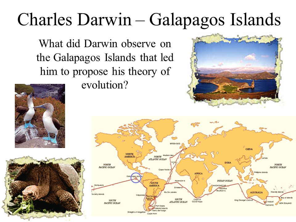 Charles Darwin – Galapagos Islands What did Darwin observe on the Galapagos Islands that led him to propose his theory of evolution?