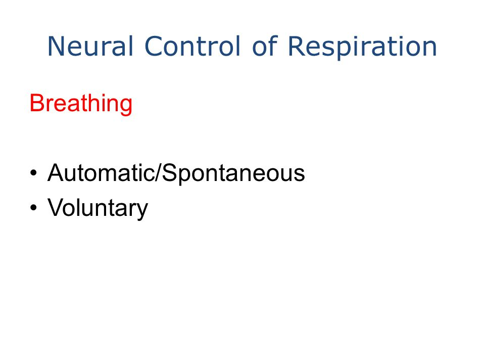 Neural Control of Respiration Breathing Automatic/Spontaneous Voluntary