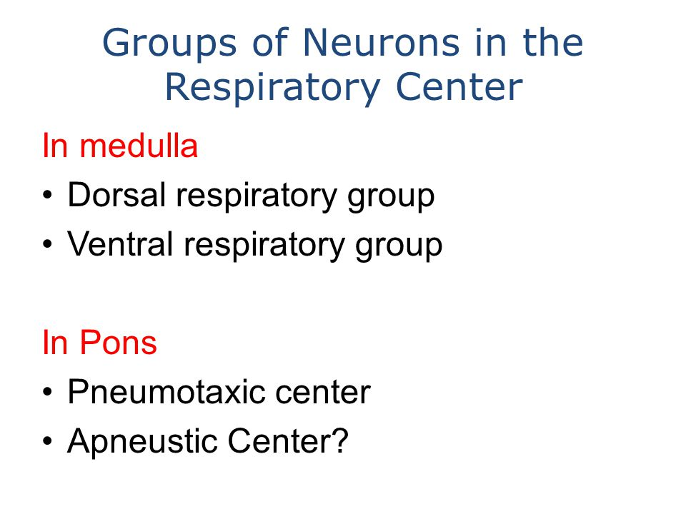 Groups of Neurons in the Respiratory Center In medulla Dorsal respiratory group Ventral respiratory group In Pons Pneumotaxic center Apneustic Center