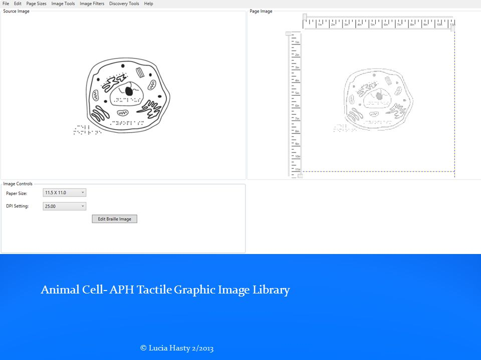 Animal Cell- APH Tactile Graphic Image Library
