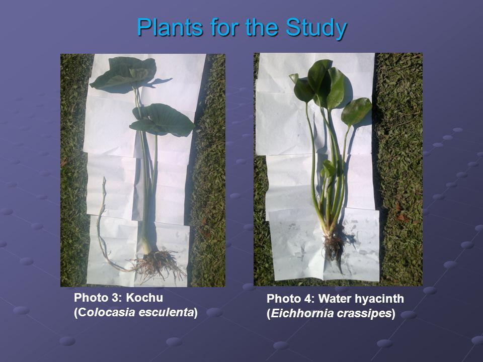 Photo 3: Kochu (Colocasia esculenta) Photo 4: Water hyacinth (Eichhornia crassipes) Plants for the Study