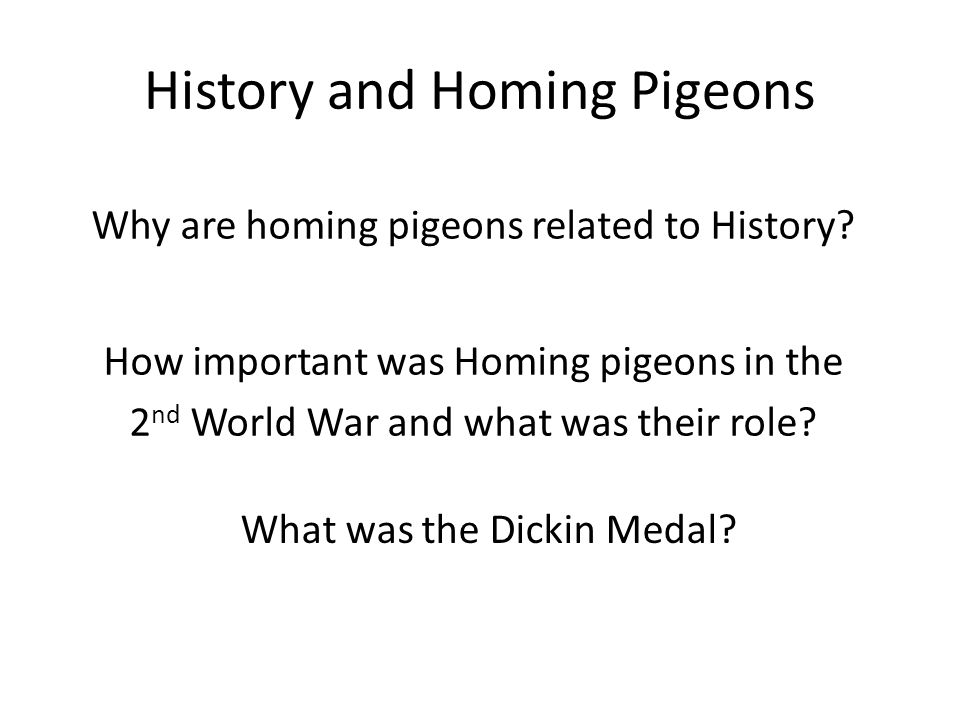 History and Homing Pigeons Why are homing pigeons related to History.