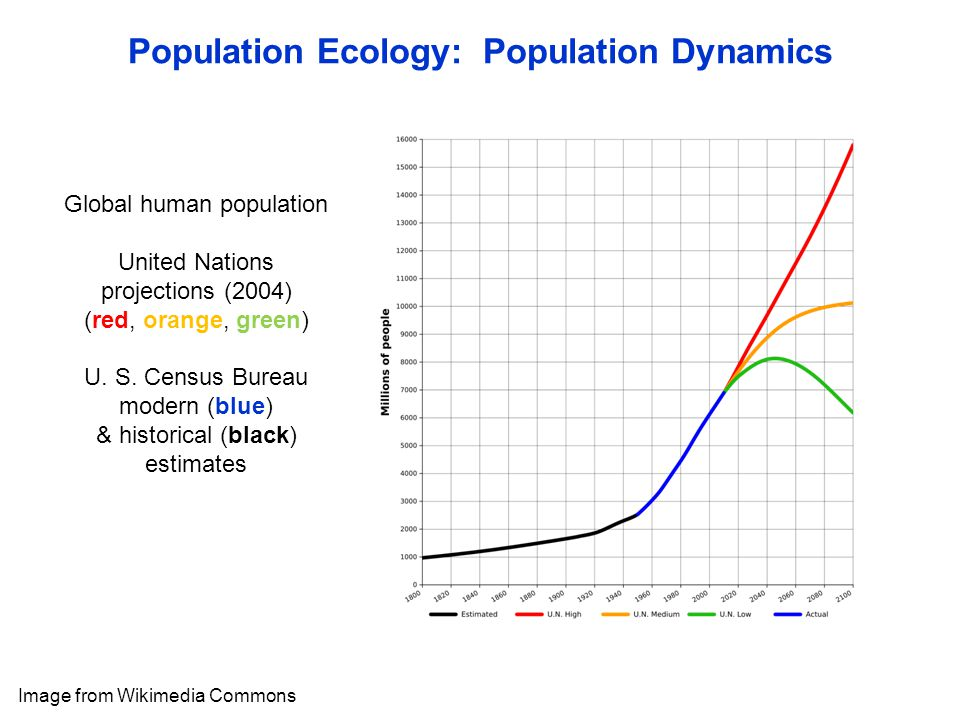 Population Ecology: Population Dynamics Image from Wikimedia Commons Global human population United Nations projections (2004) (red, orange, green) U.