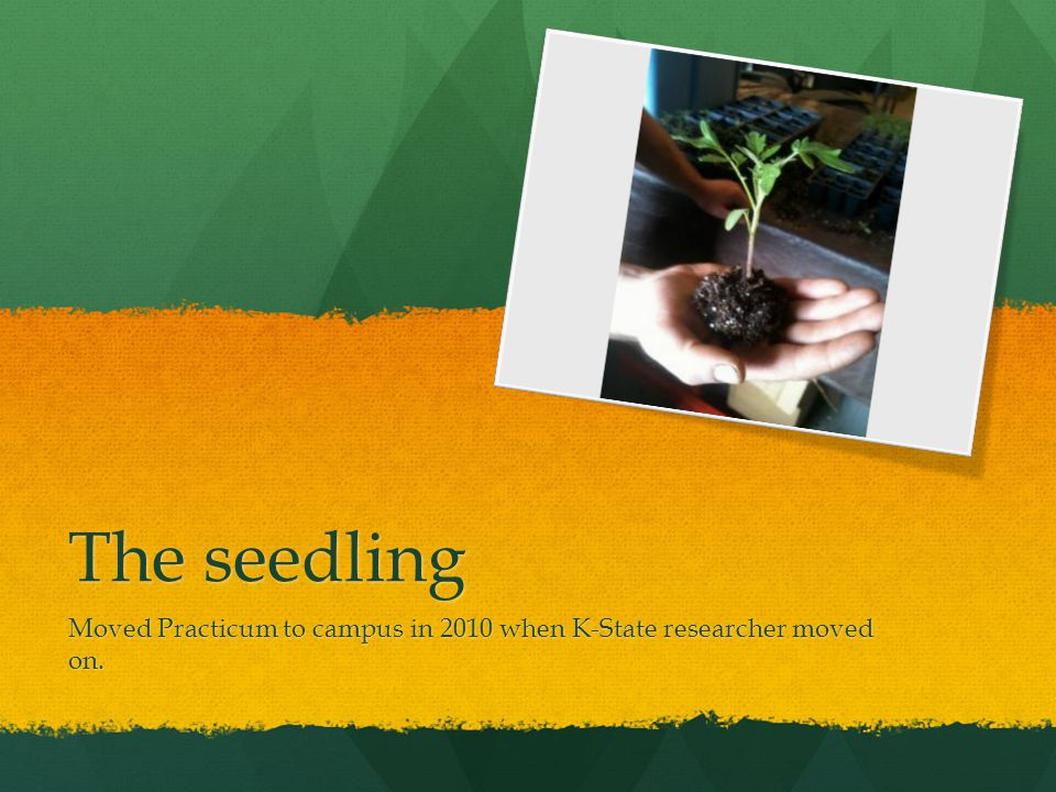 The seedling Moved Practicum to campus in 2010 when K-State researcher moved on.