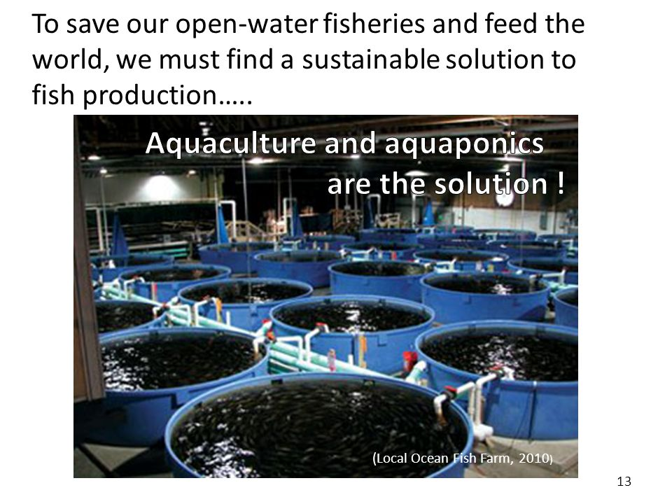 (Greenpeace USA. 2012) To save our open-water fisheries and feed the world, we must find a sustainable solution to fish production….. 13 (Local Ocean
