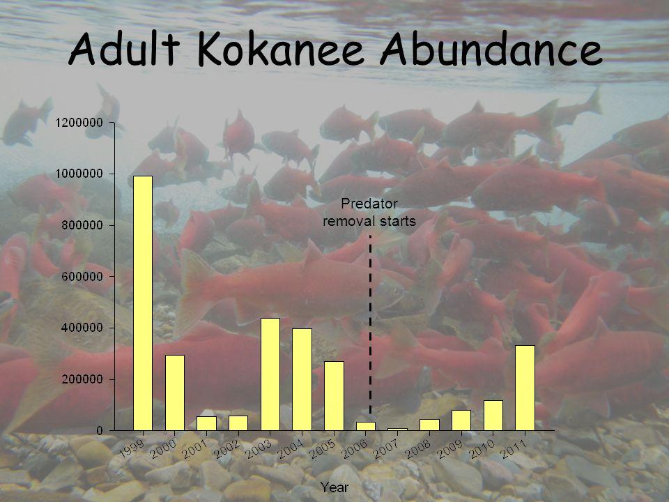 Adult Kokanee Abundance Predator removal starts