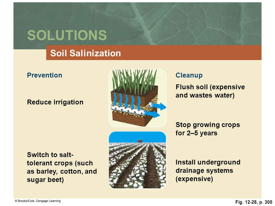 Fig. 12-28, p. 305 SOLUTIONS Soil Salinization PreventionCleanup Flush soil (expensive and wastes water) Reduce irrigation Stop growing crops for 2–5