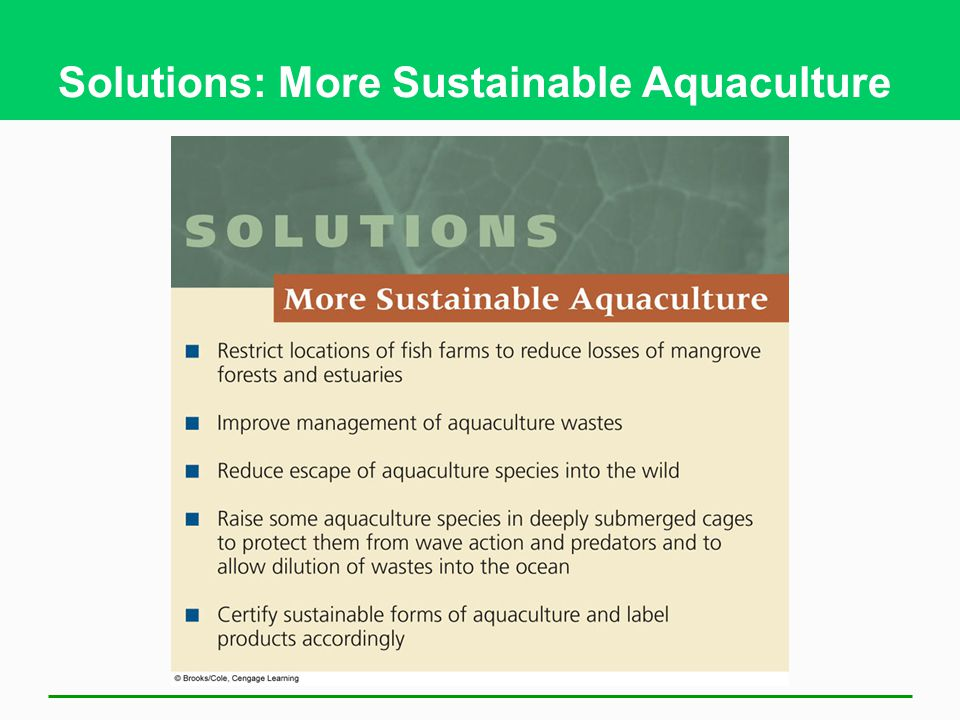 Solutions: More Sustainable Aquaculture