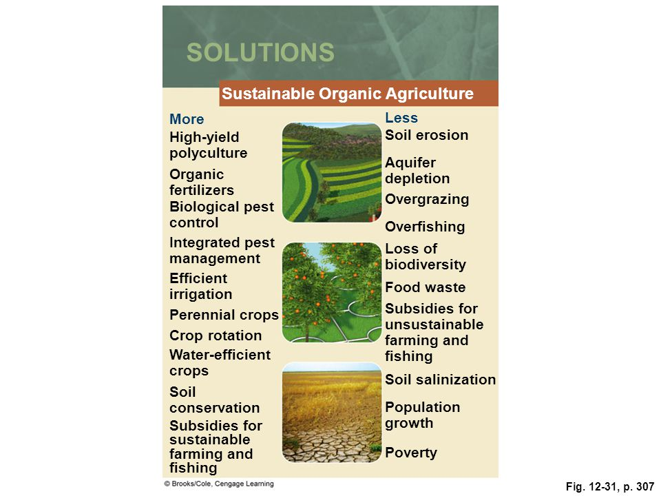 Fig. 12-31, p. 307 SOLUTIONS Sustainable Organic Agriculture More Less High-yield polyculture Soil erosion Organic fertilizers Aquifer depletion Biolo