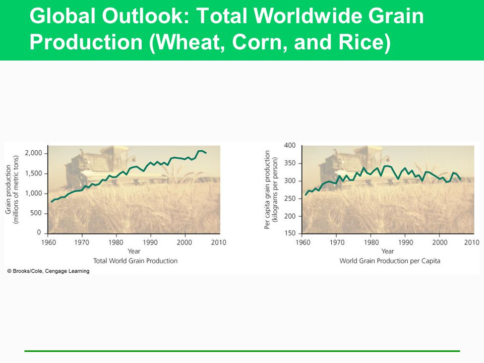 Global Outlook: Total Worldwide Grain Production (Wheat, Corn, and Rice)