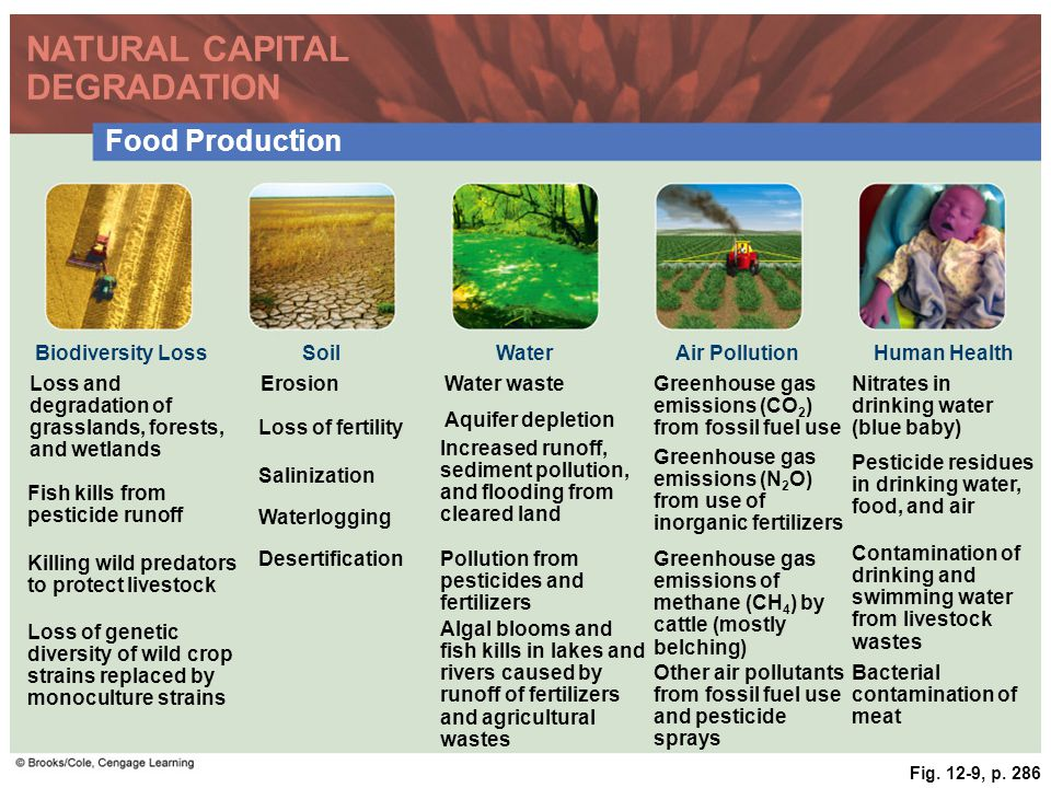 Fig. 12-9, p. 286 NATURAL CAPITAL DEGRADATION Food Production Biodiversity LossSoilWaterAir PollutionHuman Health Loss and degradation of grasslands,