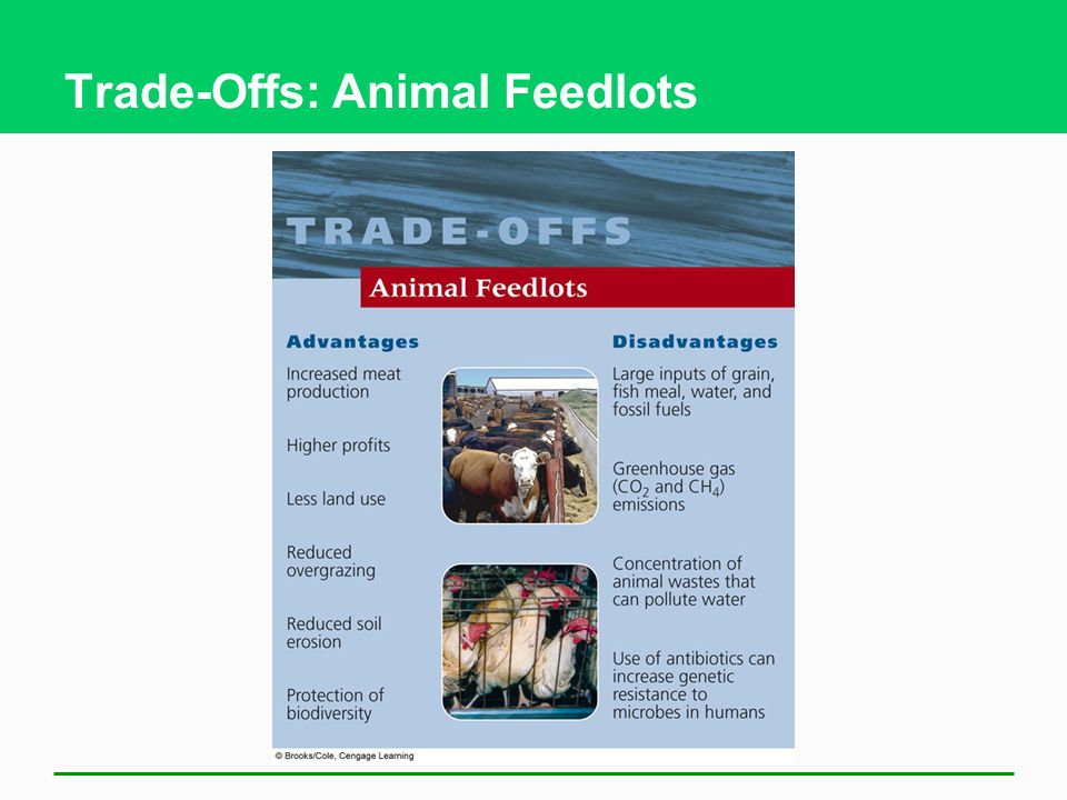 Trade-Offs: Animal Feedlots