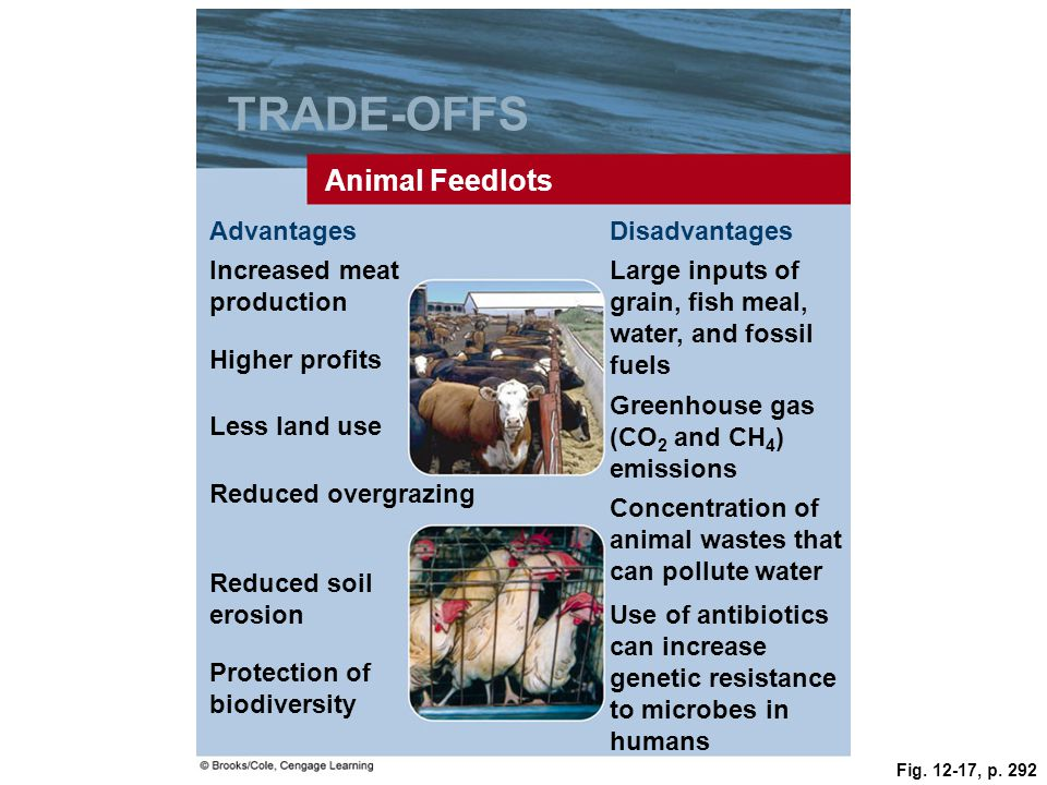 Fig. 12-17, p. 292 TRADE-OFFS Animal Feedlots AdvantagesDisadvantages Increased meat production Large inputs of grain, fish meal, water, and fossil fu