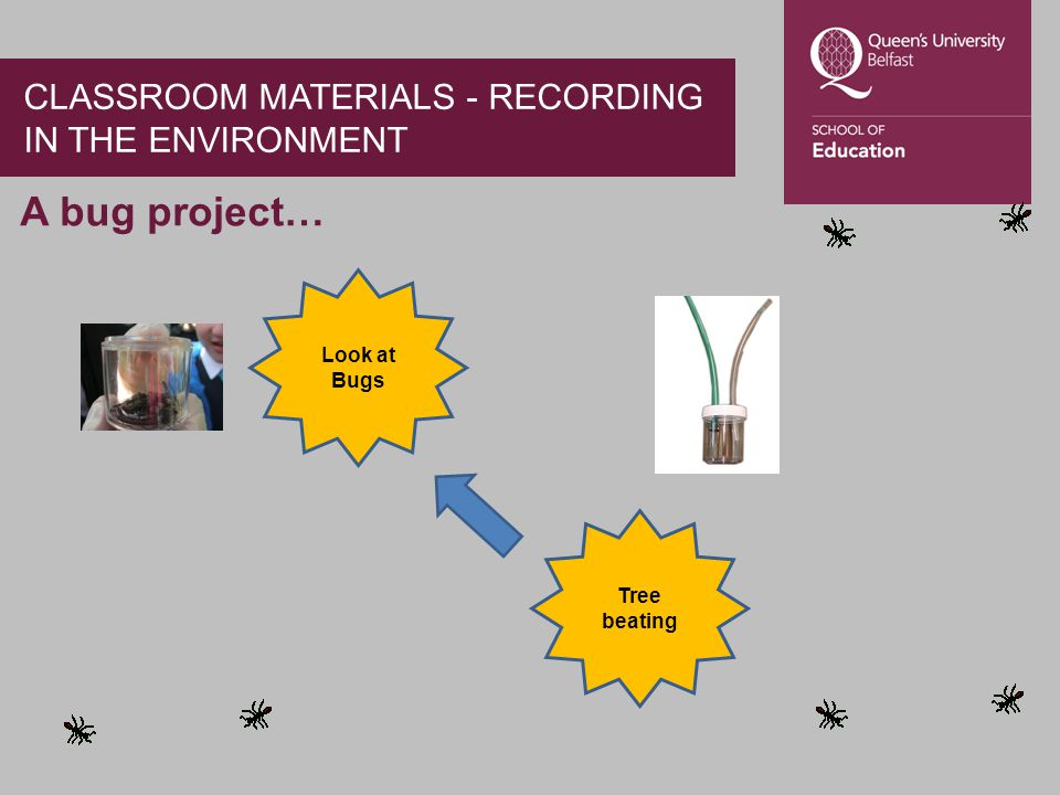 A bug project… Tree beating Look at Bugs CLASSROOM MATERIALS - RECORDING IN THE ENVIRONMENT