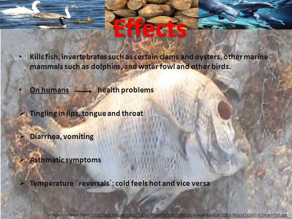 Kills fish, invertebrates such as certain clams and oysters, other marine mammals such as dolphins, and water fowl and other birds.