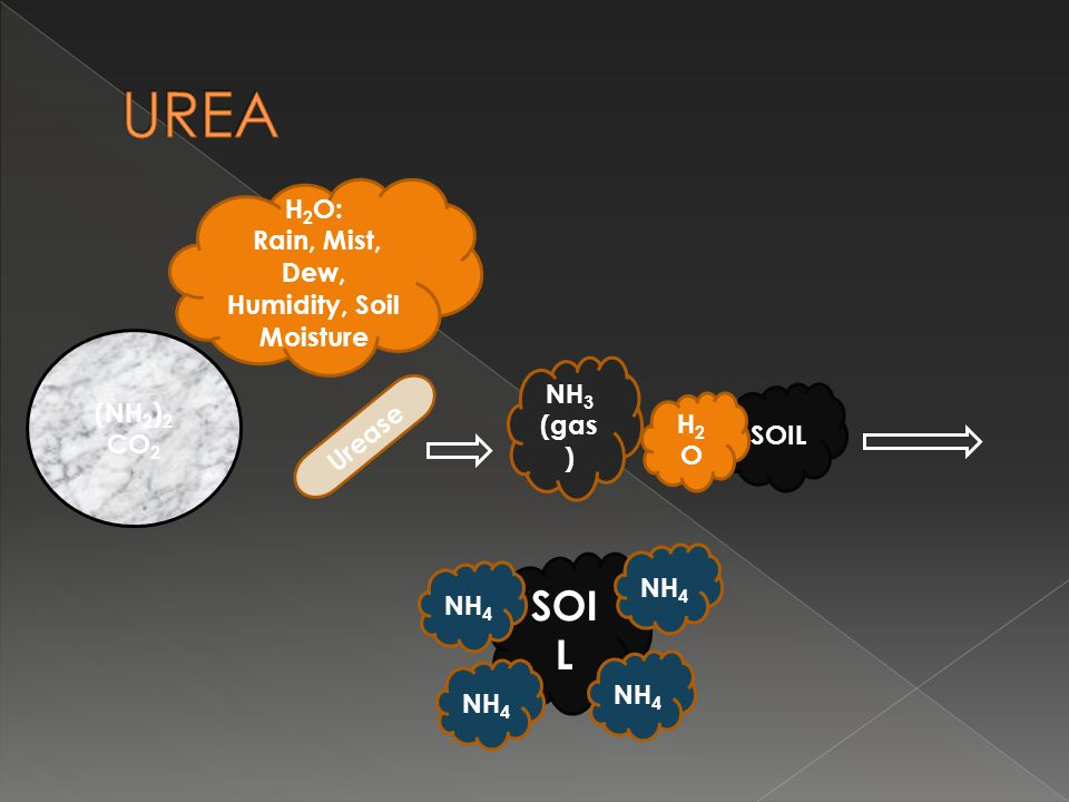 (NH 2 ) 2 CO 2 H 2 O: Rain, Mist, Dew, Humidity, Soil Moisture Urease NH 3 (gas ) SOIL H2OH2O NH 4