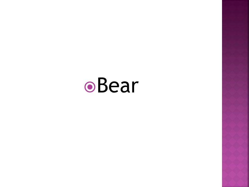  Bear