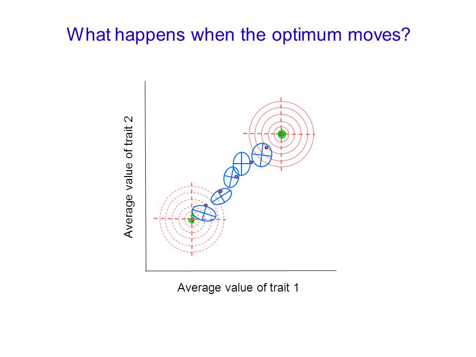Average value of trait 1 Average value of trait 2 What happens when the optimum moves