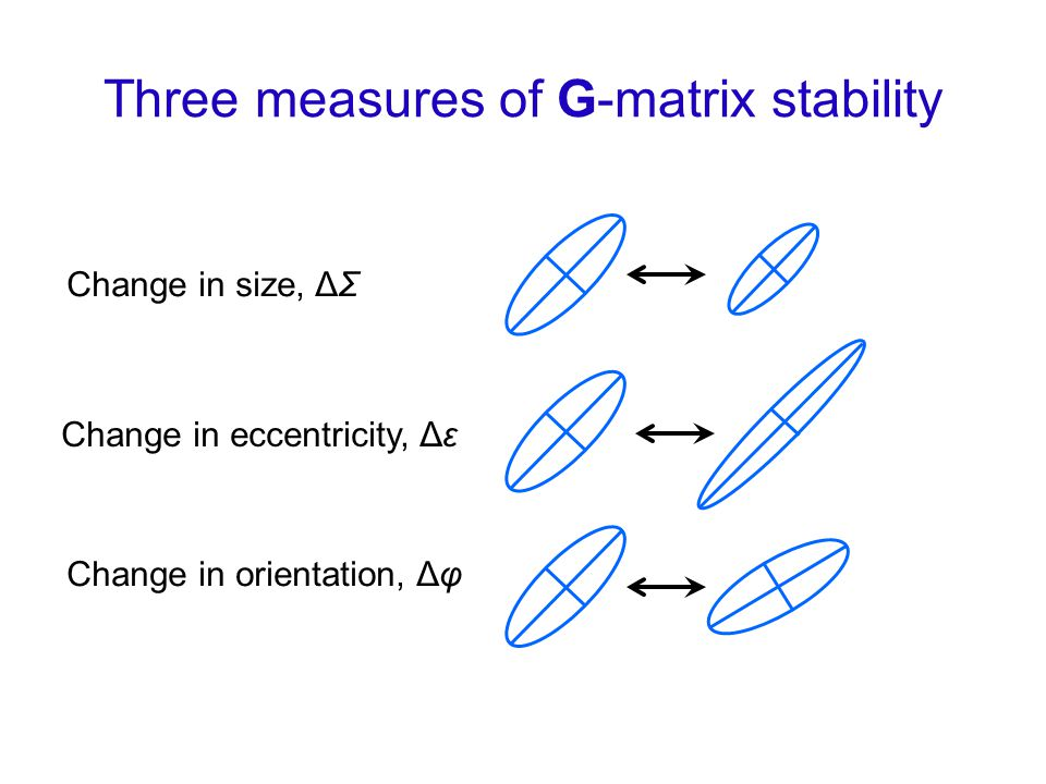 Change in size, ΔΣ Change in eccentricity, Δε Change in orientation, Δφ Three measures of G-matrix stability
