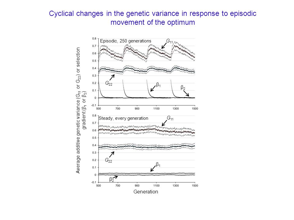 G 11 G 22 β1β1 β2β2 Episodic, 250 generations G 11 G 22 β1β1 β2β2 Steady, every generation Generation Average additive genetic variance (G 11 or G 22 ) or selection gradient (β 1 or β 2 ) Cyclical changes in the genetic variance in response to episodic movement of the optimum