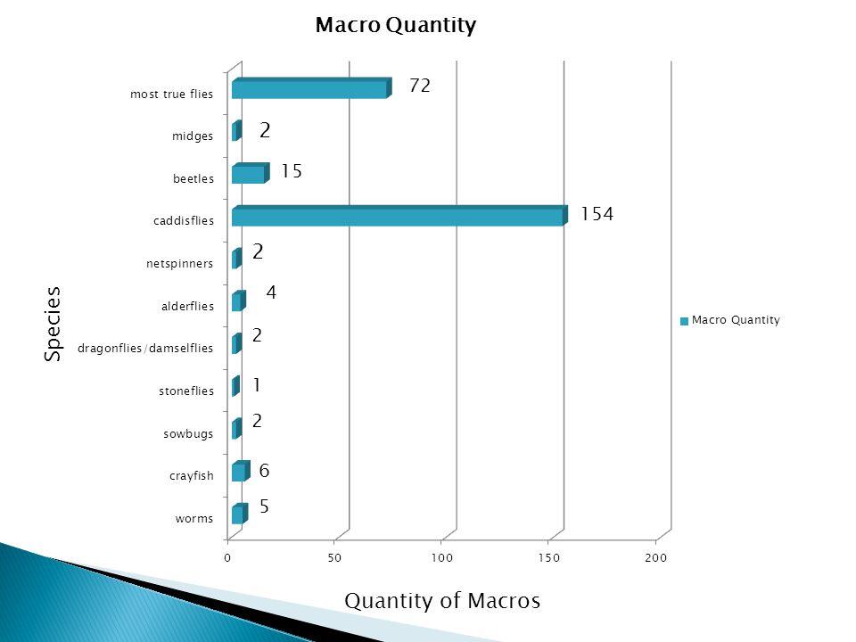 Species Quantity of Macros