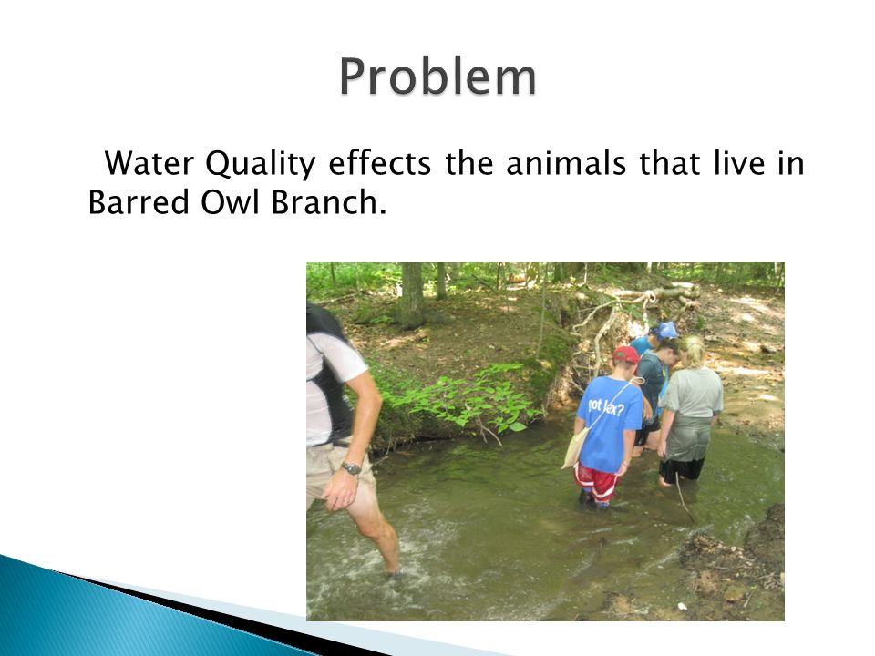 Water Quality effects the animals that live in Barred Owl Branch.
