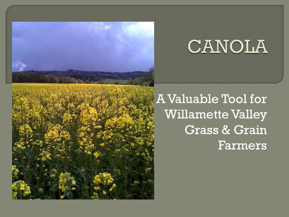 A Valuable Tool for Willamette Valley Grass & Grain Farmers