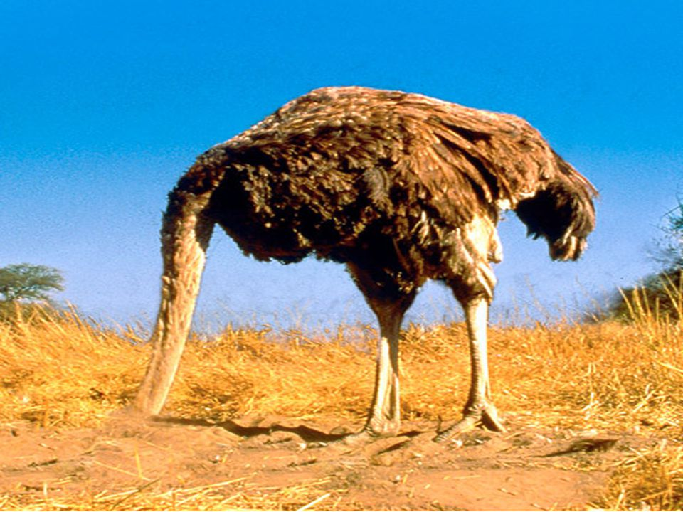 An ostrich with its head in the sand is just as blind to opportunity as to disaster - Anonymous Do our purchased electronic resources get used.