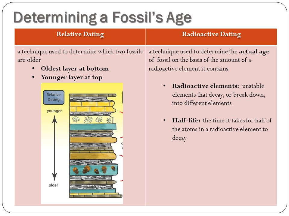 Determining a Fossil's Age Relative Dating Radioactive Dating a technique used to determine which two fossils are older Oldest layer at bottom Younger
