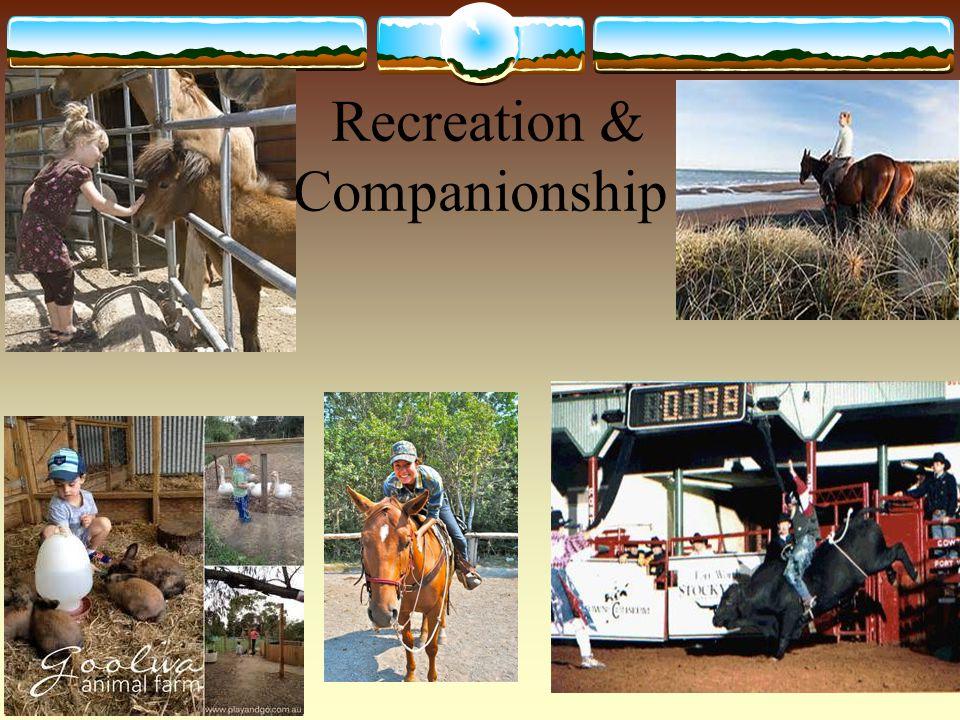 Recreation & Companionship