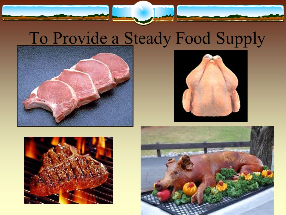 To Provide a Steady Food Supply