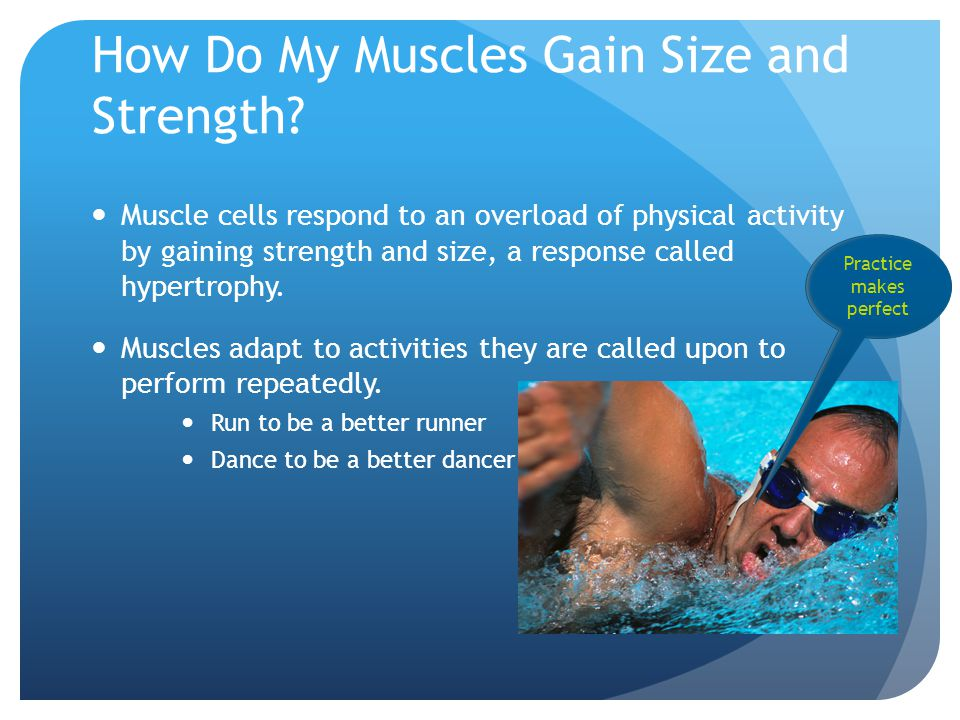 How Do My Muscles Gain Size and Strength.
