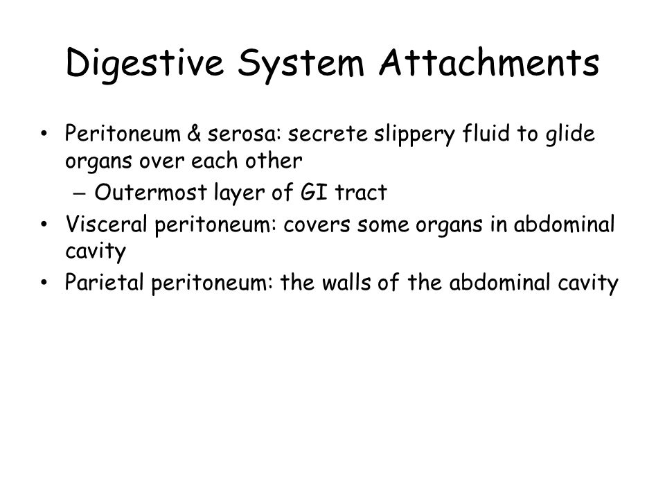 Digestive System Attachments Peritoneum & serosa: secrete slippery fluid to glide organs over each other – Outermost layer of GI tract Visceral peritoneum: covers some organs in abdominal cavity Parietal peritoneum: the walls of the abdominal cavity
