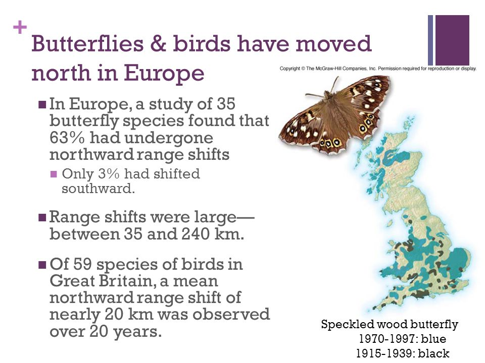 + Butterflies & birds have moved north in Europe In Europe, a study of 35 butterfly species found that 63% had undergone northward range shifts Only 3% had shifted southward.