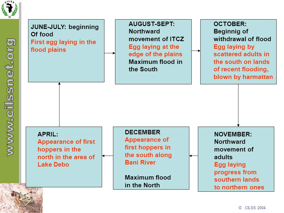 © CILSS 2004 JUNE-JULY: beginning Of food First egg laying in the flood plains AUGUST-SEPT: Northward movement of ITCZ Egg laying at the edge of the p