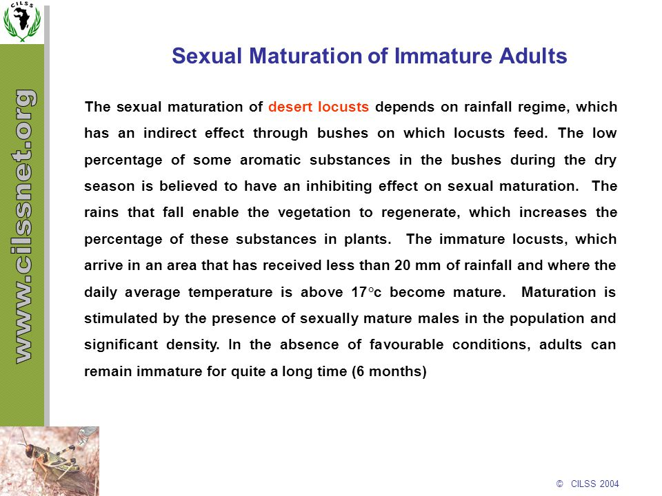 © CILSS 2004 Sexual Maturation of Immature Adults The sexual maturation of desert locusts depends on rainfall regime, which has an indirect effect thr